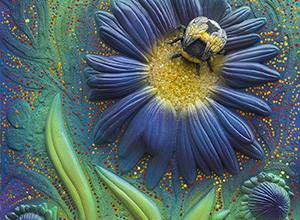 Bumblebee on Wild Blue Astor