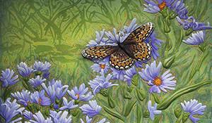 Butterfly on Wild Blue Astor