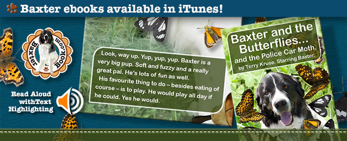 BB-butterflies-pic